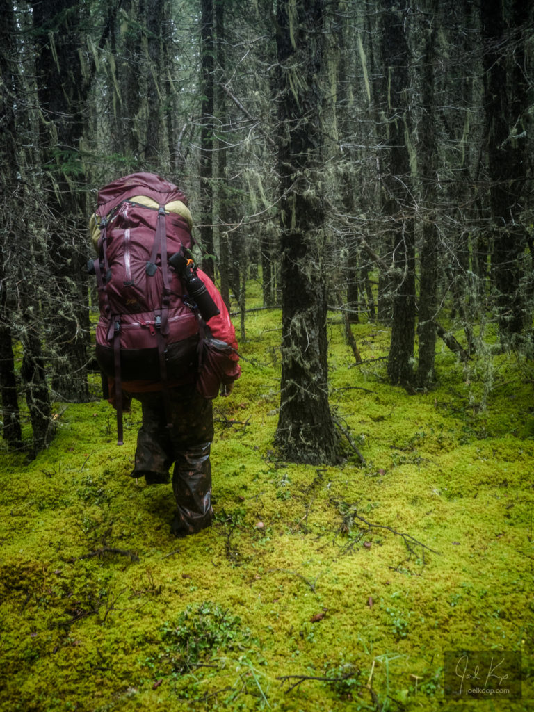 Dead Reckoning Through Mossy Forest