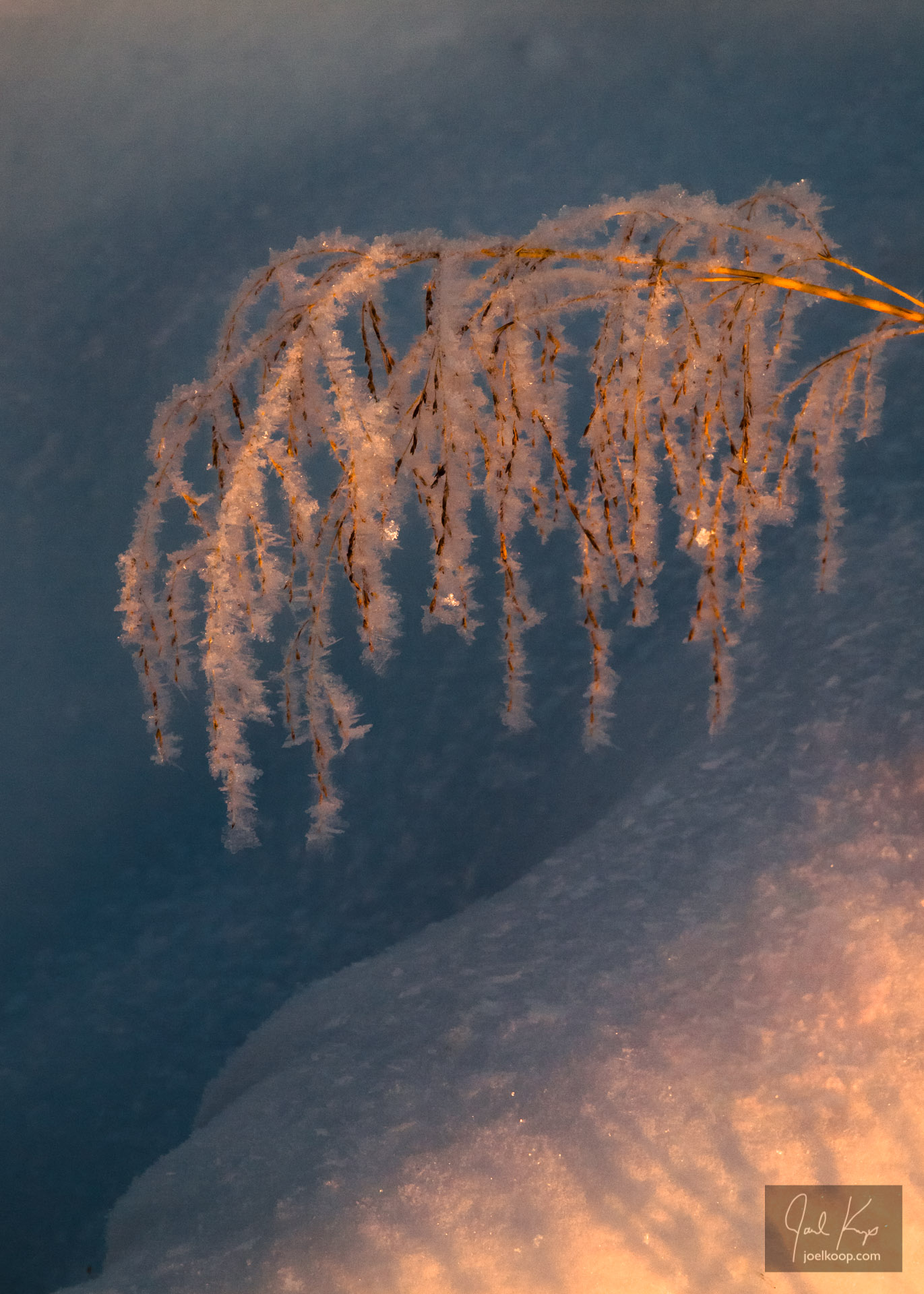 Evening Light on Frosted Grass