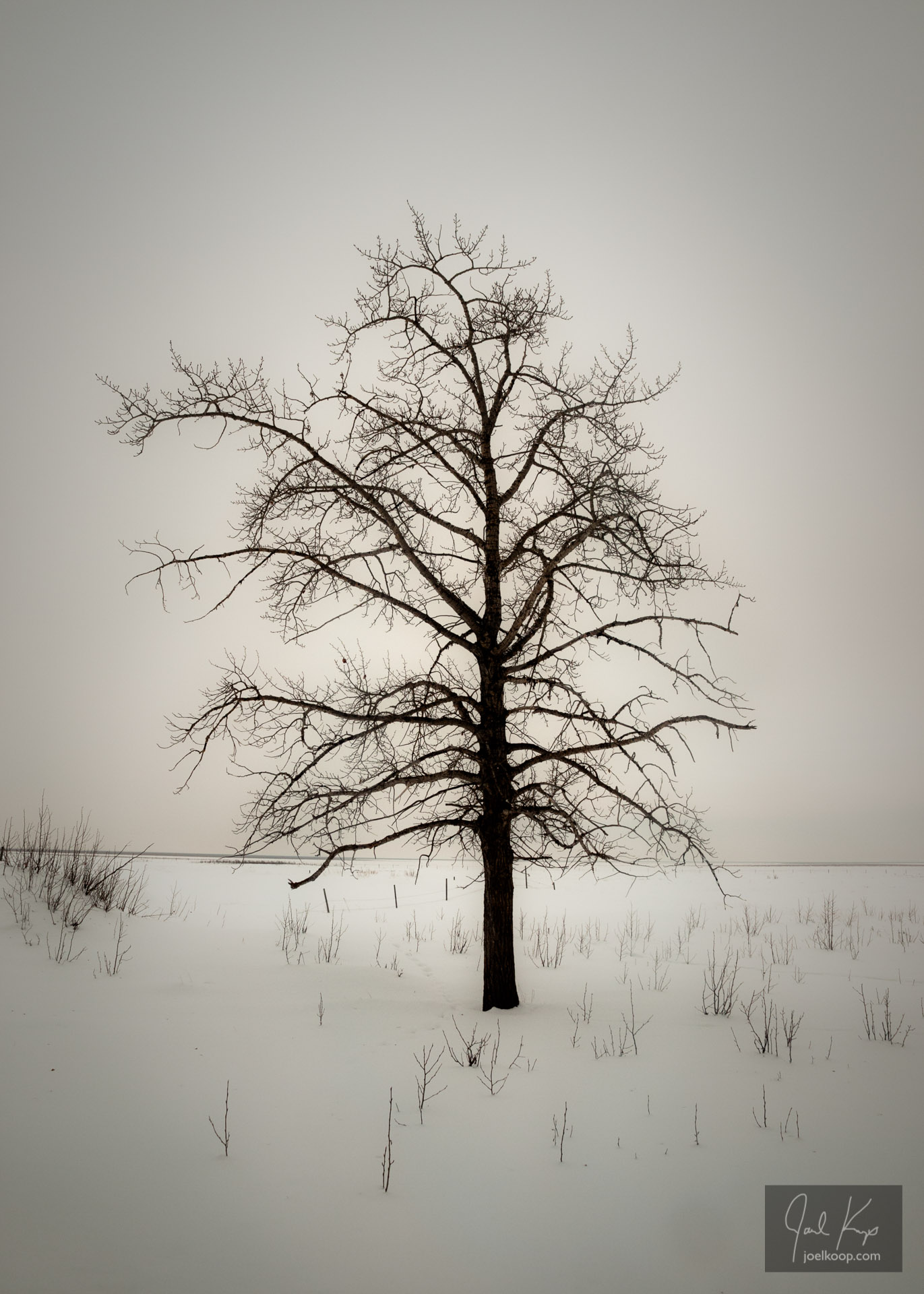 Tree in a Sea of Snow