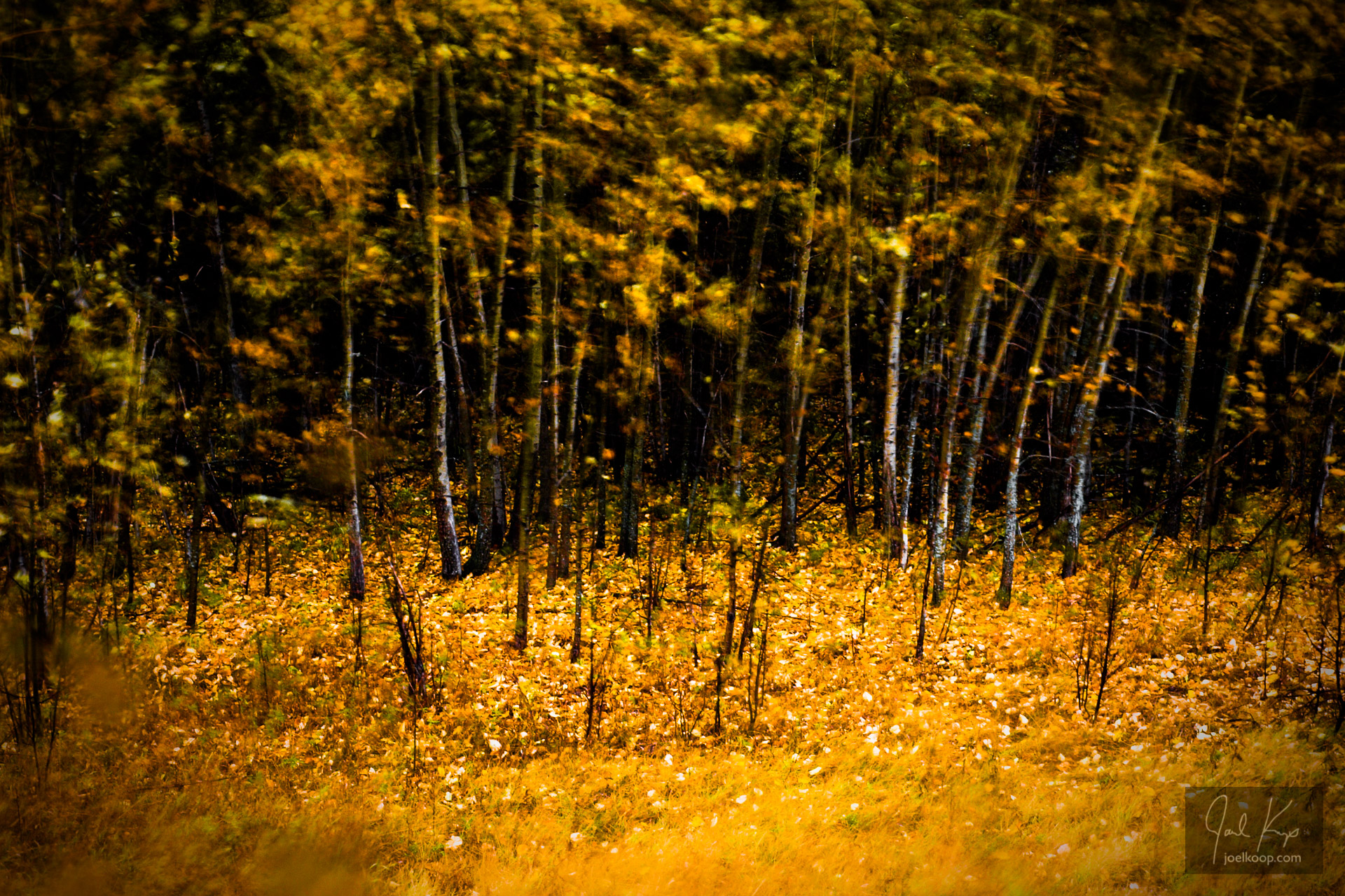 Impressionist Autumn Forest
