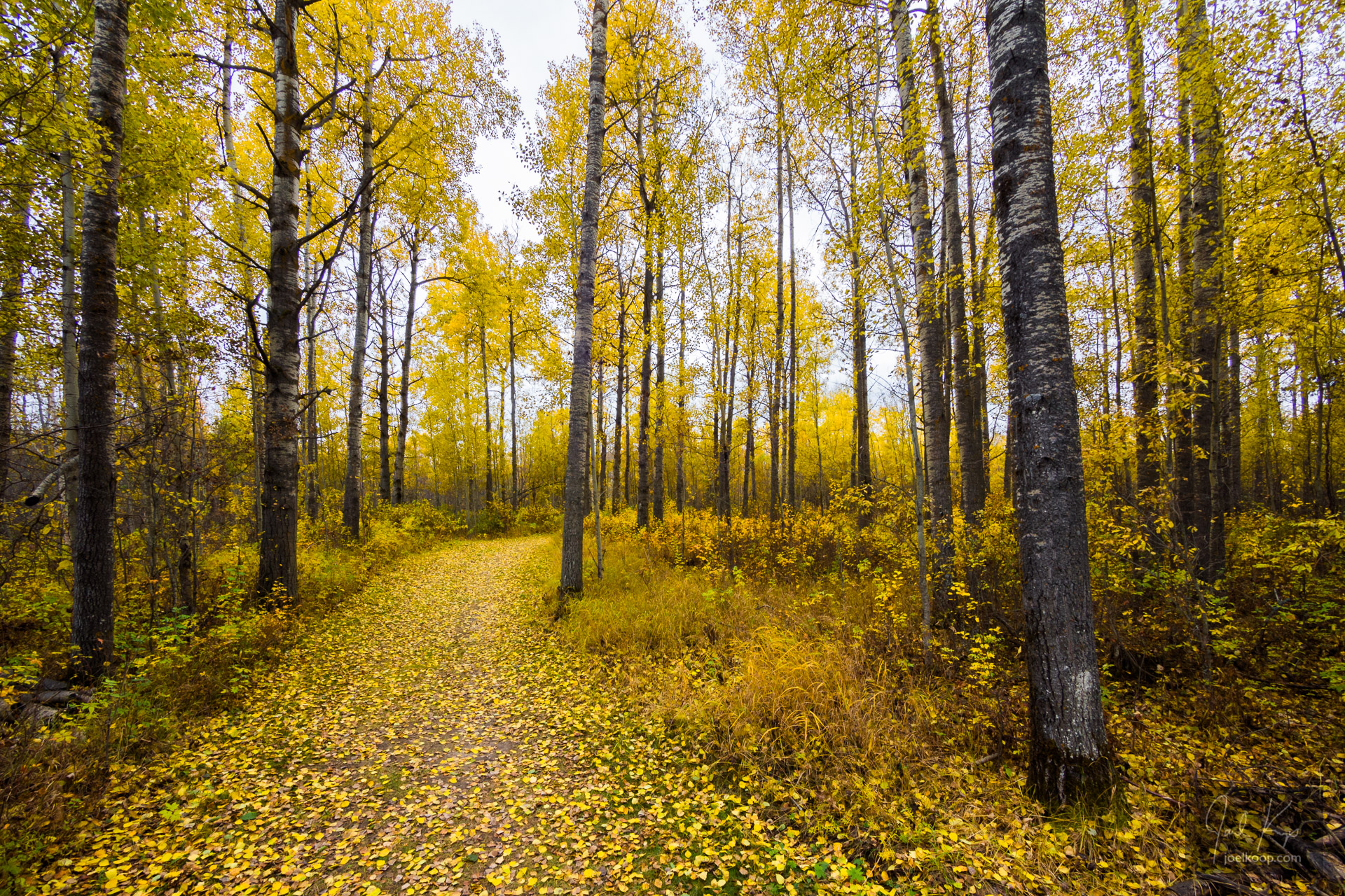 Yellow Fall Path