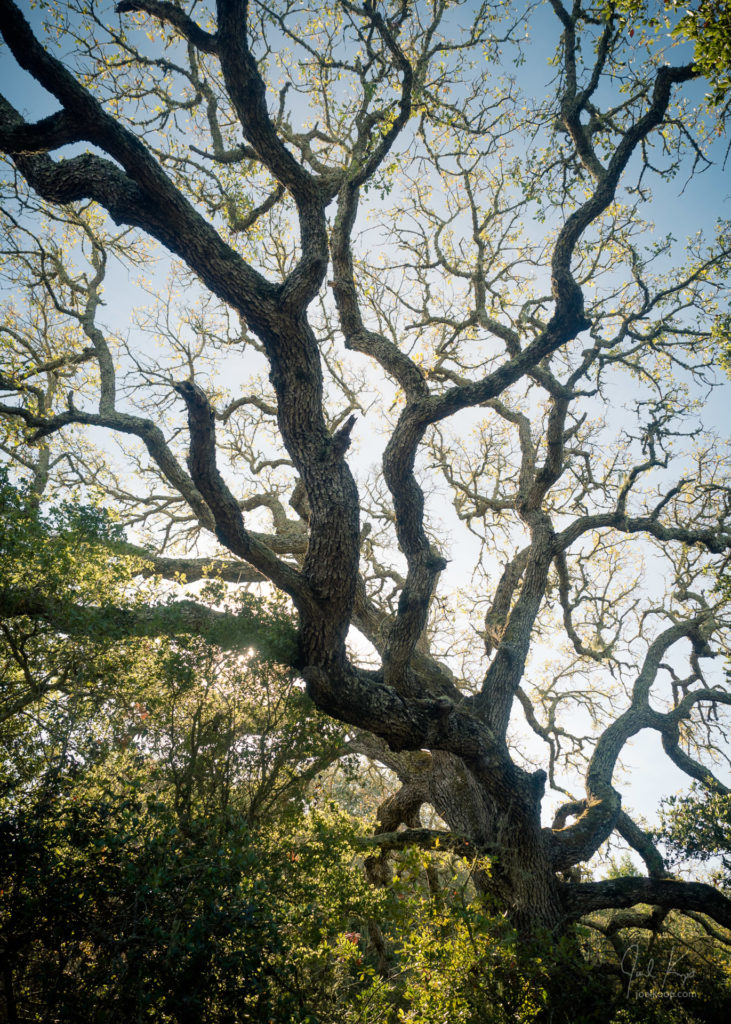 Gnarled Branches Above