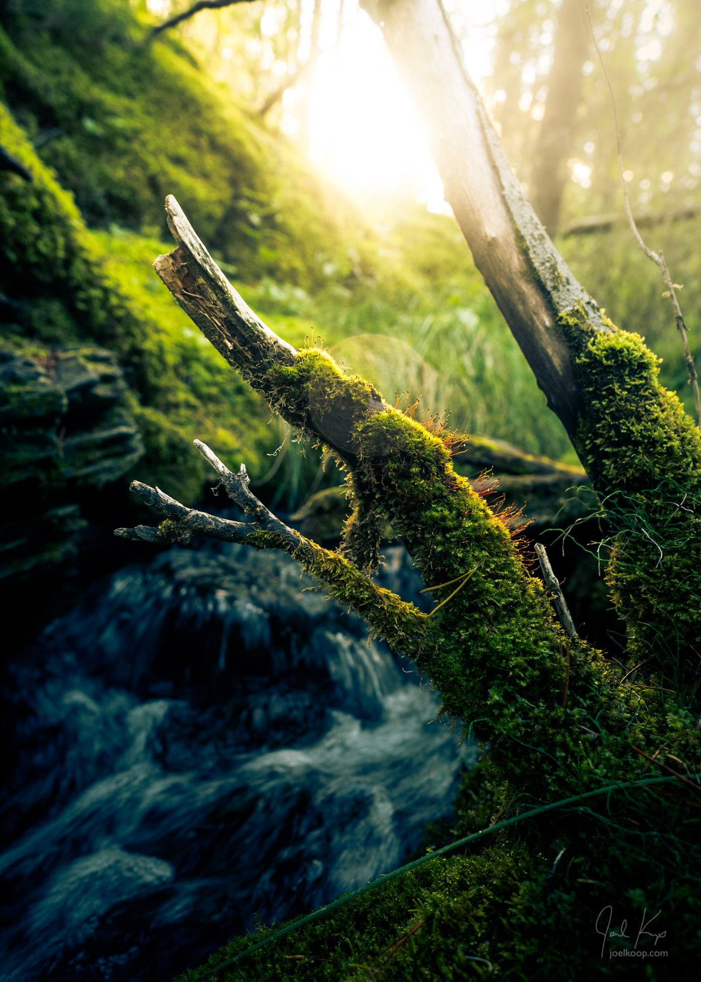 Sprouting Stalks over Mossy Stream