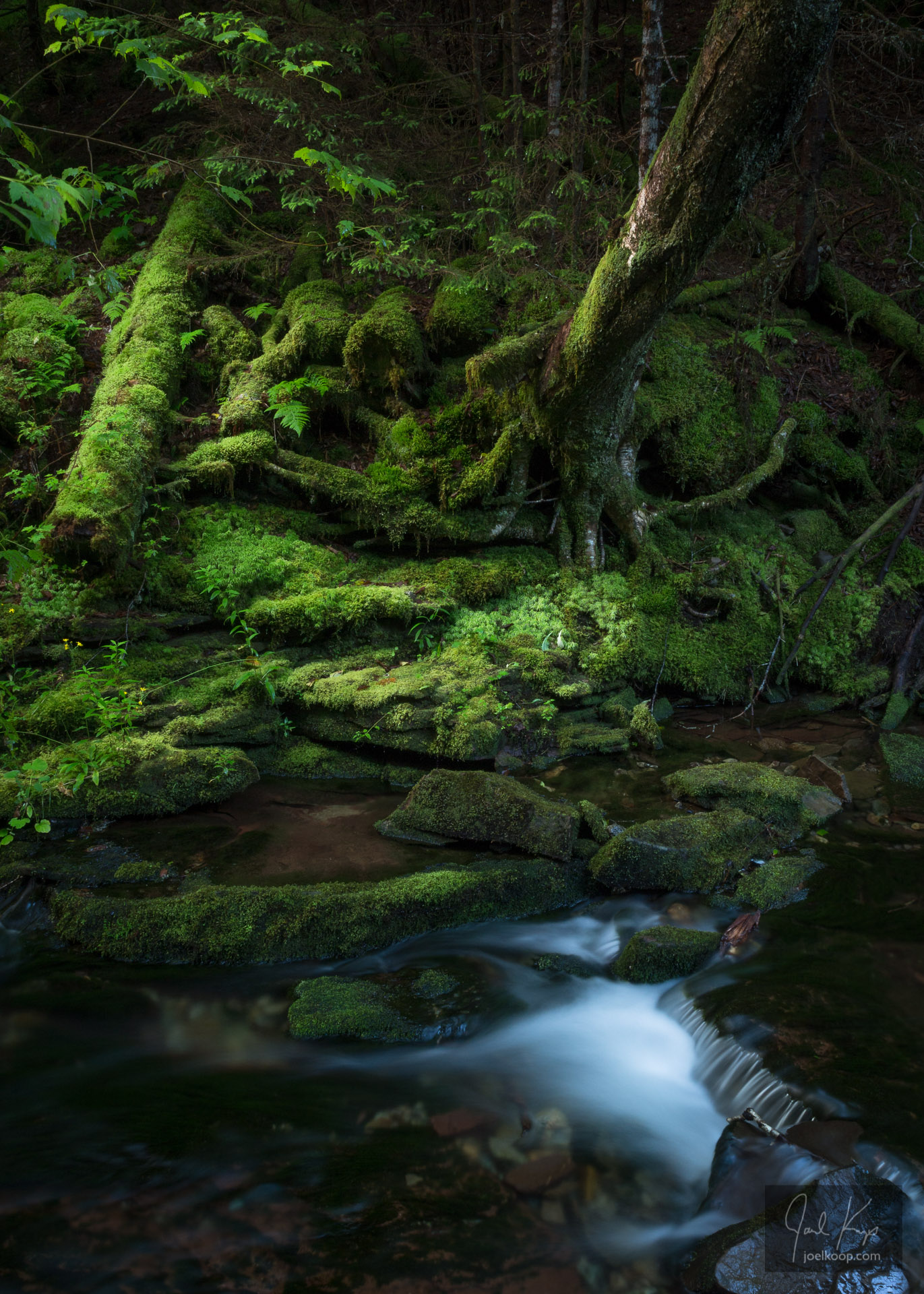 Enchanted Mossy Stream