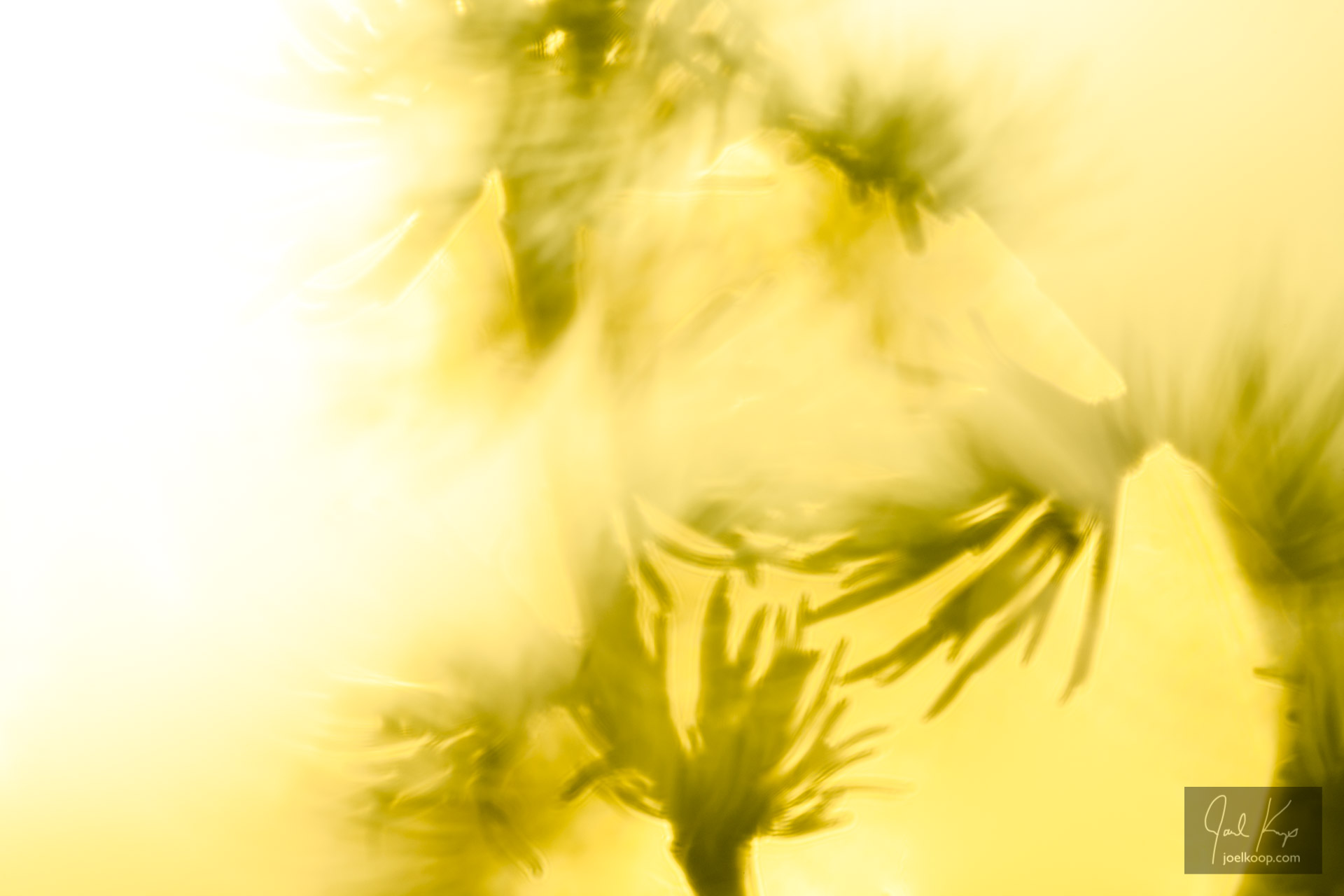Into the Sun: Tamarack Needles